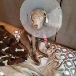 Jeremy Rinehart KC Dog Training profile image.