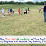 Wonder Dog Training & Games profile image.