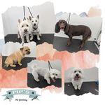 Pip's Pet Grooming profile image.