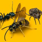 Town and Country - Rochester Pest Control profile image.