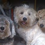 Paws-Galore Pet Services profile image.