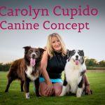 Canine Concept, Focused Dog Training profile image.