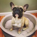 Muttineer Dog Training profile image.