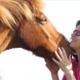 The Horseback Heroine logo