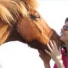 The Horseback Heroine profile image