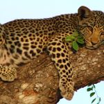 Nature Bound Africa Ltd profile image.