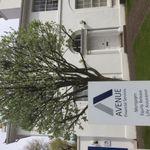 Avenue Financial Services profile image.