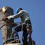 Tree Removal Lancaster profile image.