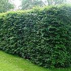 Discount Home & Garden Centre