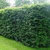 Discount Home & Garden Centre profile image
