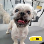 Mad Dog Mobile Grooming profile image.
