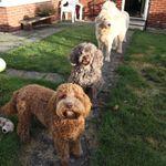 Harrisons Positive Dog Training profile image.