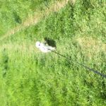 Country Dog Walks/ Cat Visiting Service profile image.