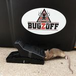 BUGZOFF Termite & Pest Control Hill District - Castle Hill   Pennant Hills   Baulkham Hills profile image.
