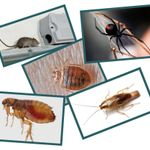 Tip Top Pest Control Services profile image.