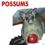 RID Pest Control profile image.