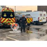 K9 New World Order Ltd - Secuirty Dog & Guard Services profile image.