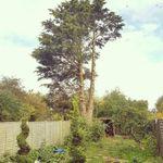 Scullion Tree Care Ltd profile image.