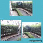 GTD Gardening Services profile image.