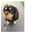 Catz'n'Dogz'n' Furry Friends profile image.