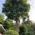 Biggs Tree Care profile image.