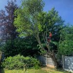 Ashley Sayers Tree Services profile image.