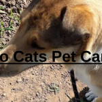 Two Cats Pet Care profile image.