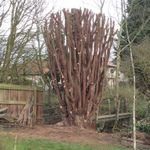 TREEWORX profile image.