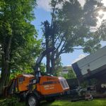 MS landscaping & tree care profile image.