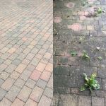 orchard tree services profile image.