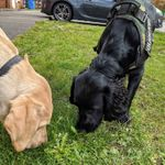King's Town K9s profile image.