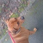 Doggydude  profile image.