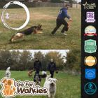 Go For Walkies and Dog Training logo