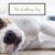 The Walking Dog profile image