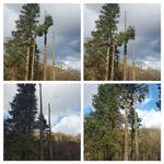 Acorn Tree Surgeons profile image.