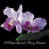 Floral Events profile image