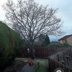 The Arbor Master Tree Services profile image.