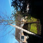 Taylors tree and landscaping profile image.