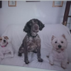 Monty and friends pet services profile image