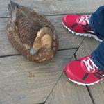 Brooks Pet Sitters profile image.