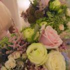 Highfield blooms