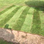 Trimming Hedge Gardening profile image.