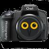Owl Photography profile image