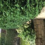 Green and clean landscaping  profile image.