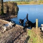 JC Pet Care profile image.