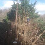 Giles Elliott Tree Surgery profile image.