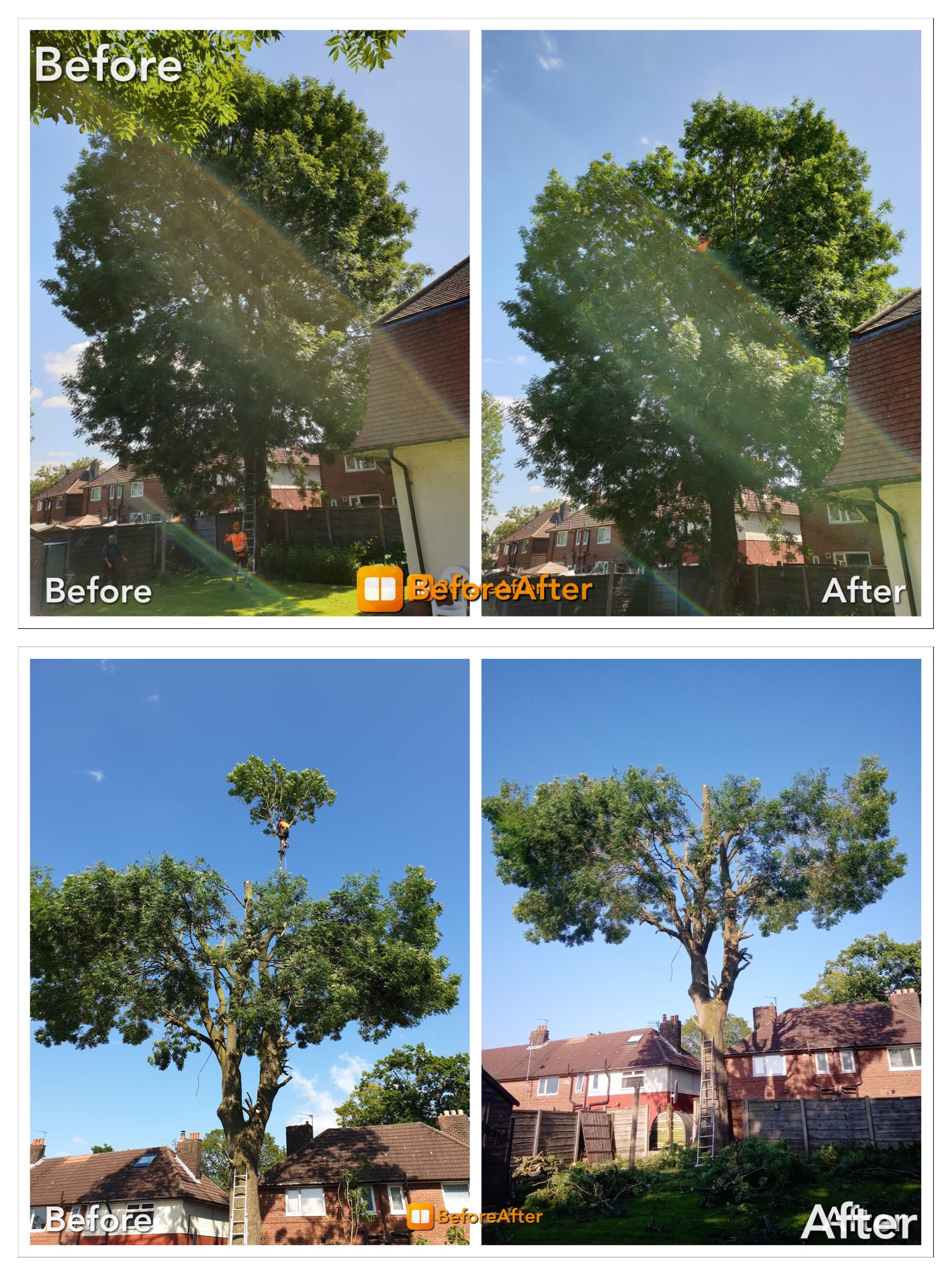 Greenrose Tree Care Bark Profile And Reviews