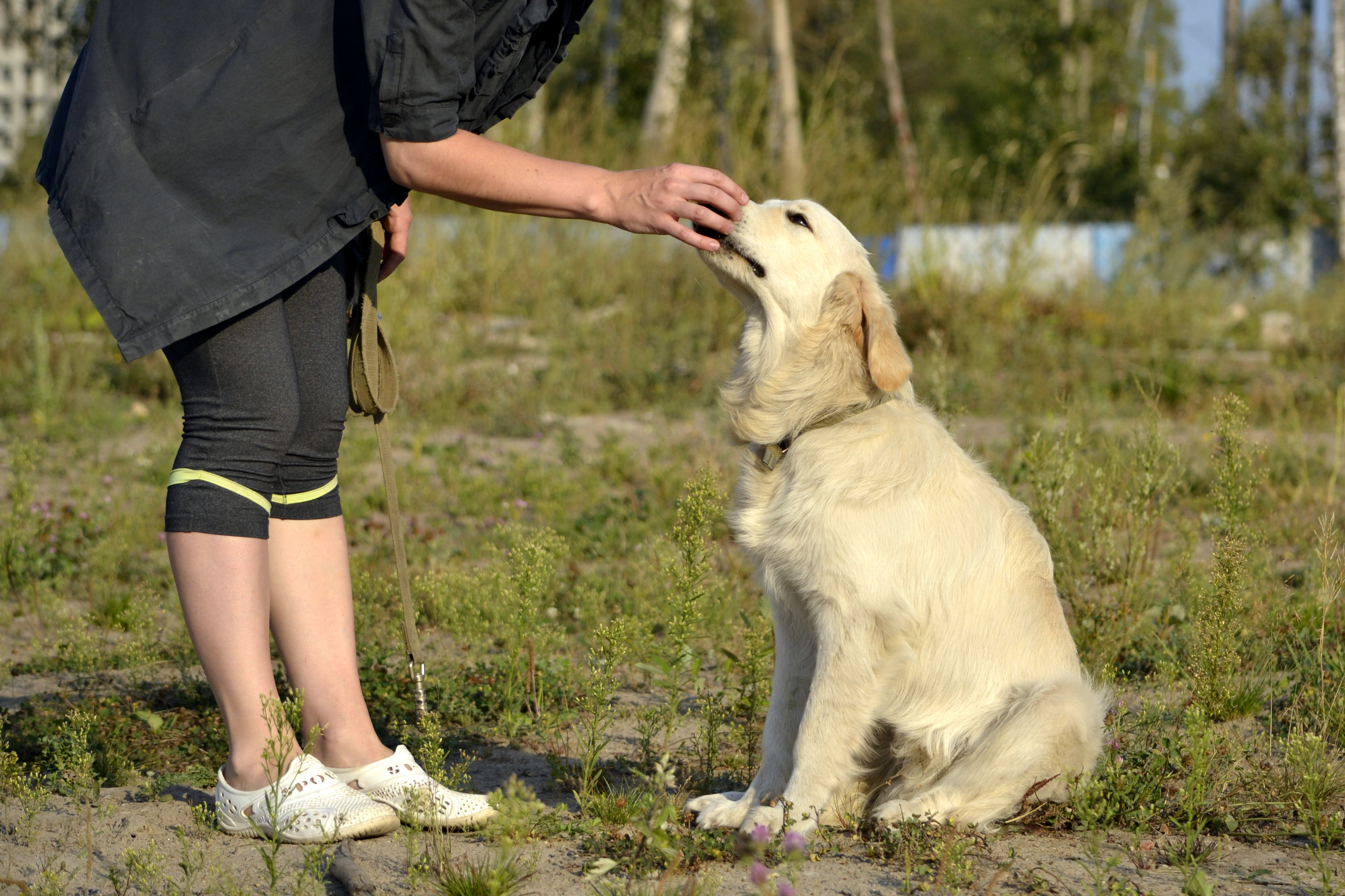 Find The Best Dog Trainers In Bangor Bark Com