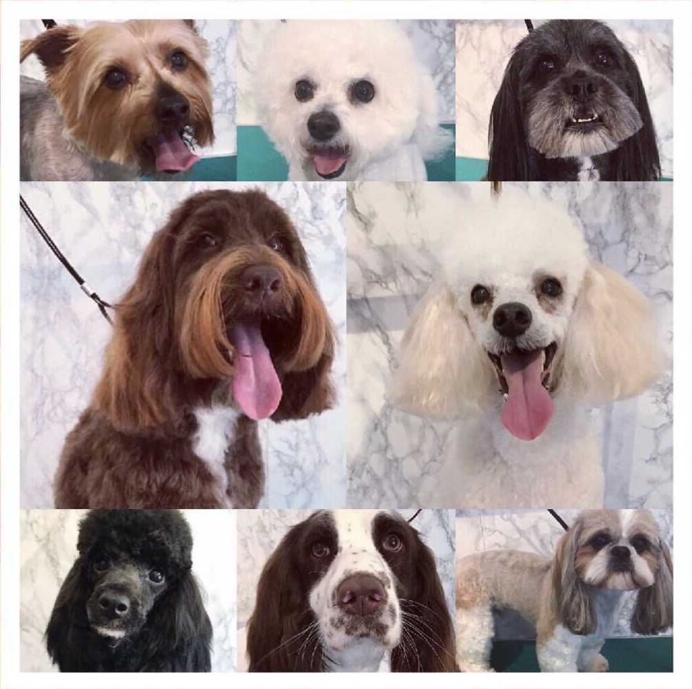 Find The Best Pet Groomers In Sheffield Bark Com